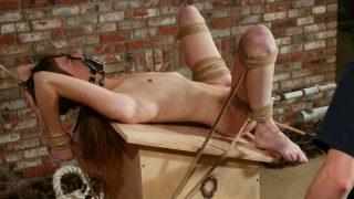 Ashley Hogtied.com – sexytube.vip